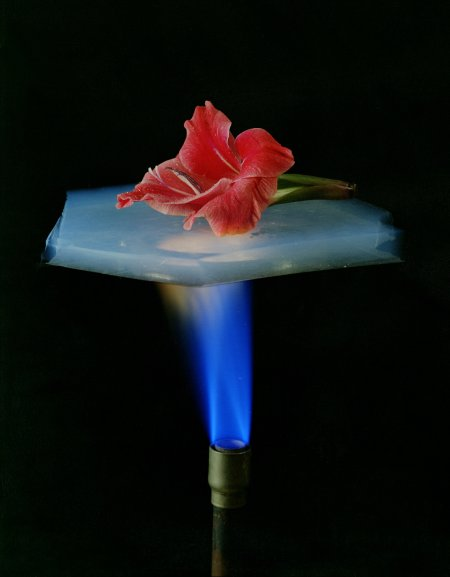 Aerogel and flower