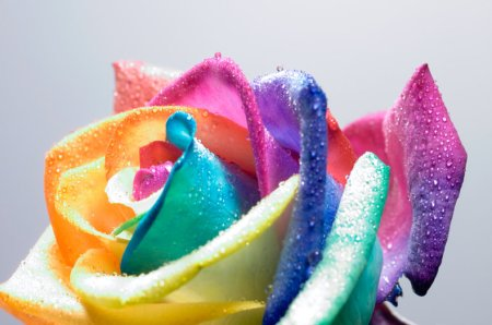 Tie dyed roses for How to make tie dye roses