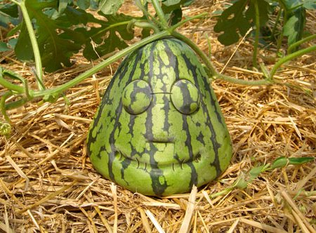 Face-shaped watermelon