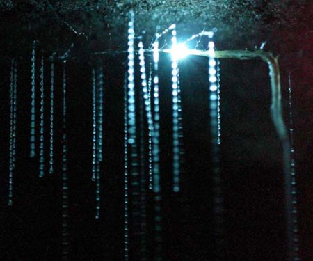Glowwormcave
