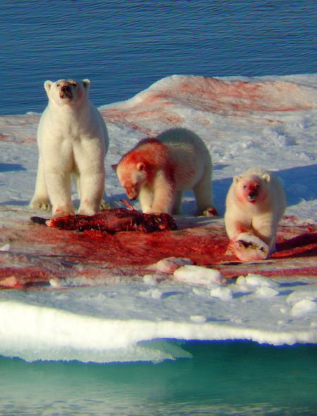 murder-bears