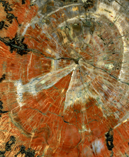 polished-petrified-wood