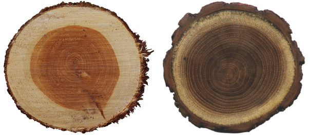 sapwood-comparison